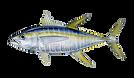 tuna-yellowfin.png