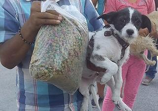 May 25 dog and food (2).jpeg