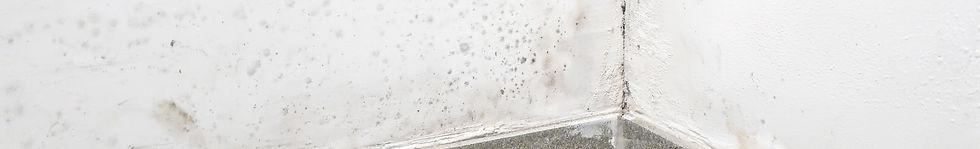 Schimmel- und Wasserschadensanierungen | Frank & Söhne GmbH