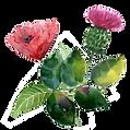fleur massage.png