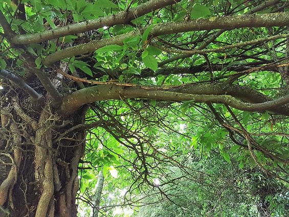 foret arbre détente