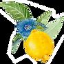 citron soigner par les plantes