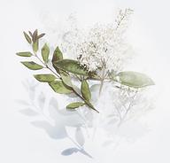 Fleurs blanches tarif.png