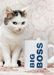 small-white-cat-sits-mug-with-inscriptio
