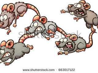 Rats in the Cellar