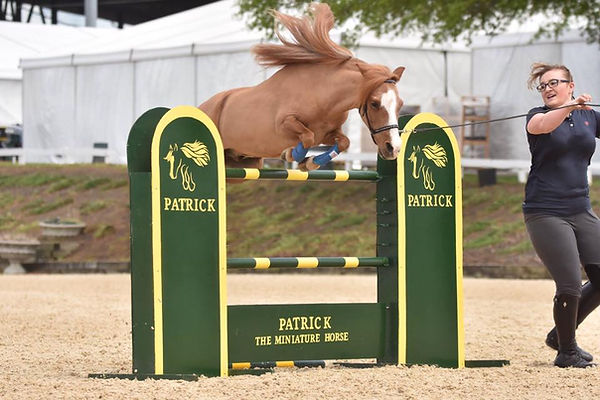 Patrick The Miniatue Horse jumps overa tall tandard during a demonstration at the LandRover Kentucky 3 Day Event