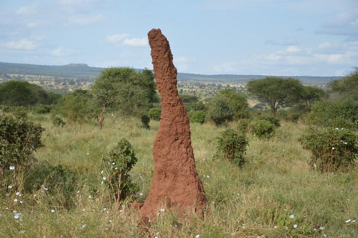 Termite Hill.JPG