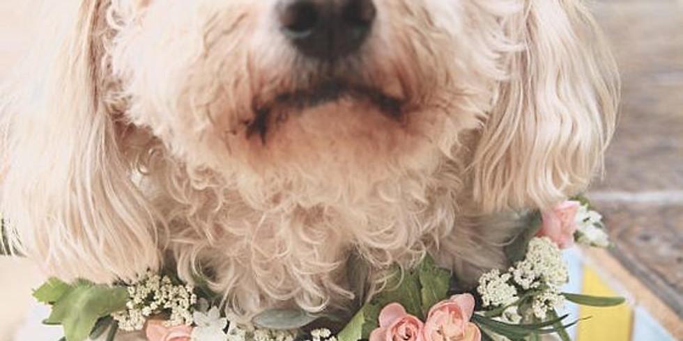 Blossoms & Brew-Dog Days