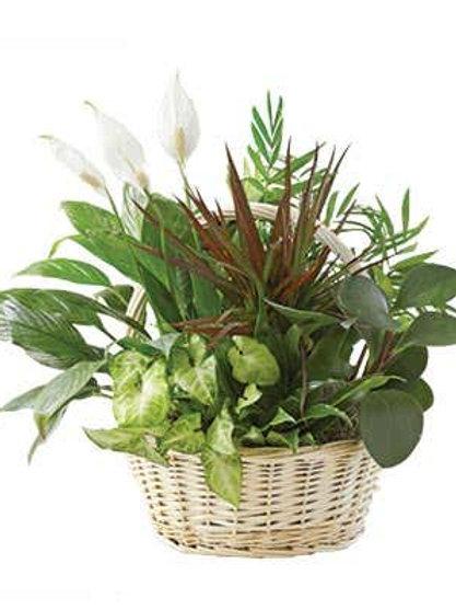 Tropical Plant Garden Basket