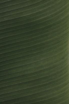 Green Leaf_edited.jpg