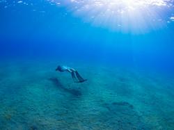Surfing Survival Training