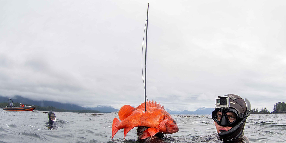 Spearfishing Expedition - Ucluelet, BC