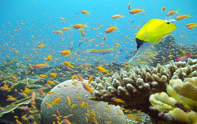Shimoni-Reef-Lodge-coral_edited.jpg