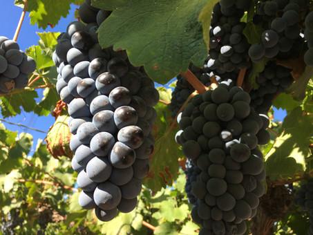 Mendoza; food, wine and ….