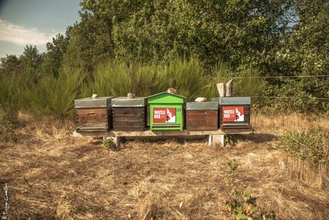 Les 2 ruches à Damiattes