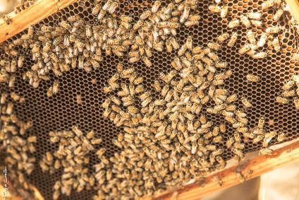 My Bee Babies