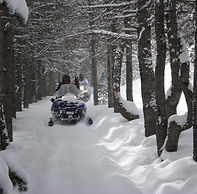 Crooked Tree Trail