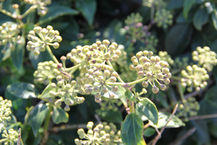 Nature - Odd plant