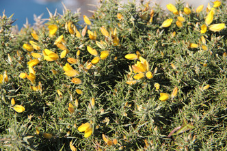 Close-Up - Yellow Flowers