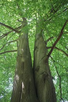 Nature - Trees
