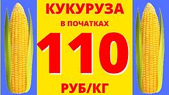 кукуруза (13).png