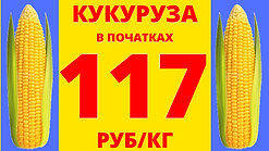 кукуруза (12).png