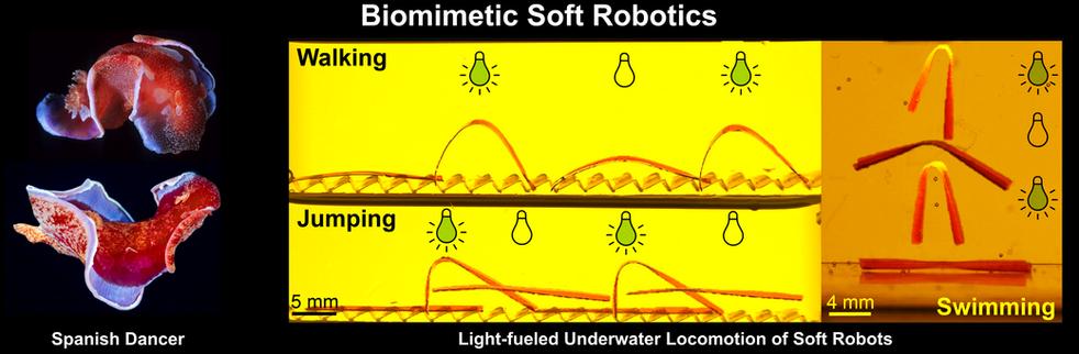 Biomimetic Soft Robotics