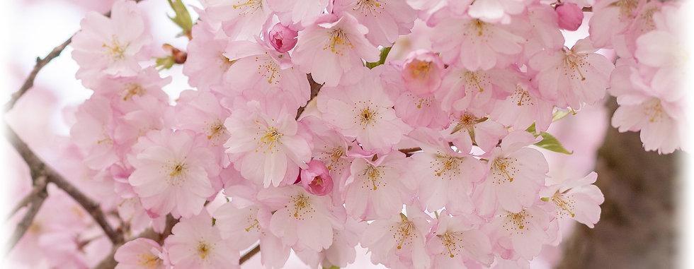 kirchblüten-6109.jpg