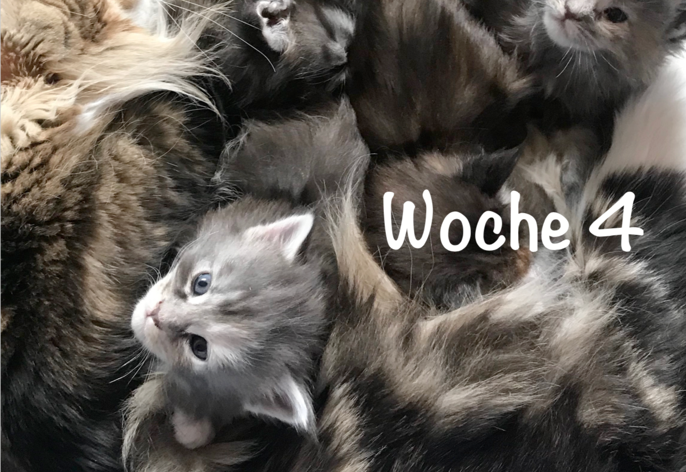 04-Woche4.png