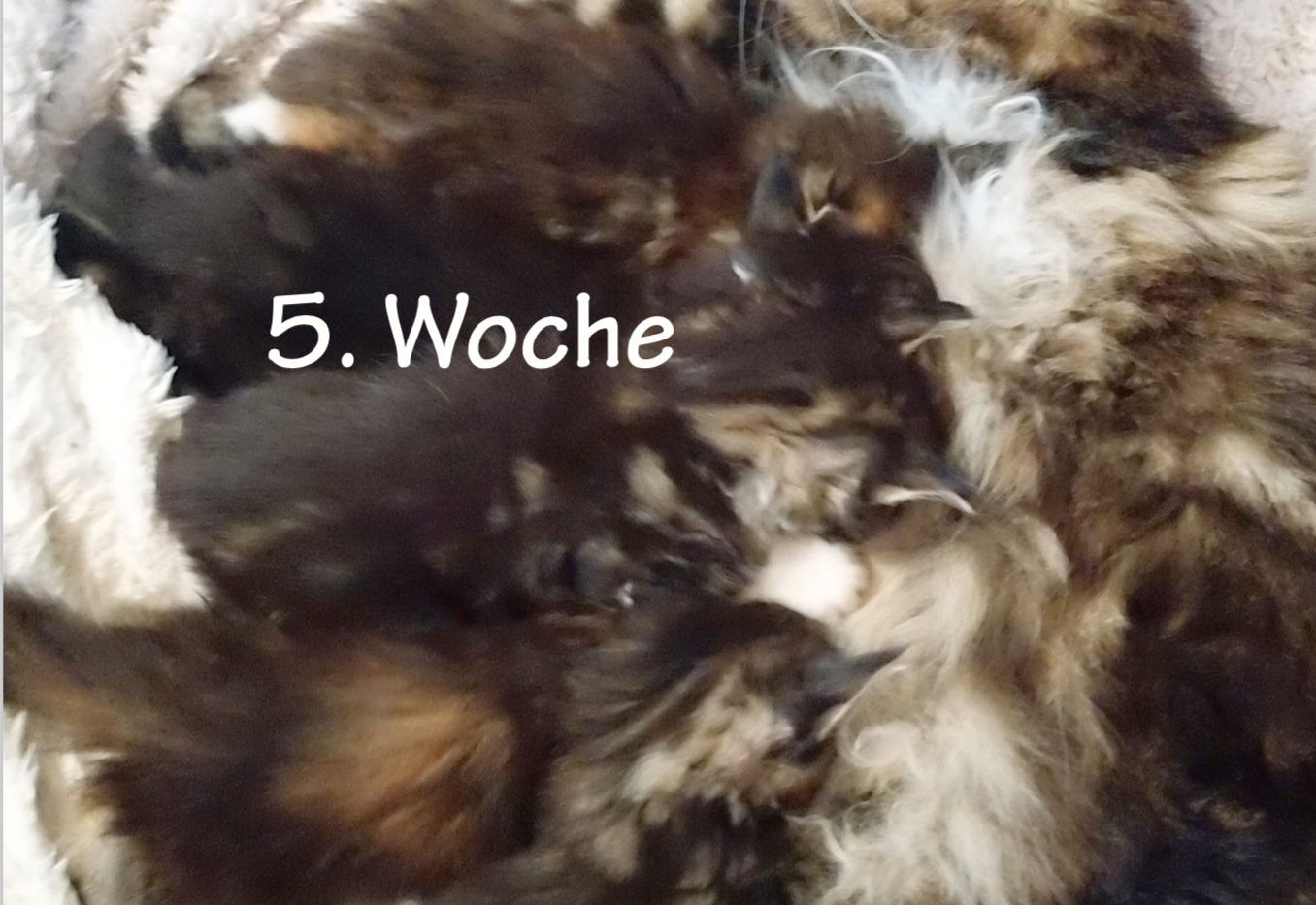 01-Woche5.png