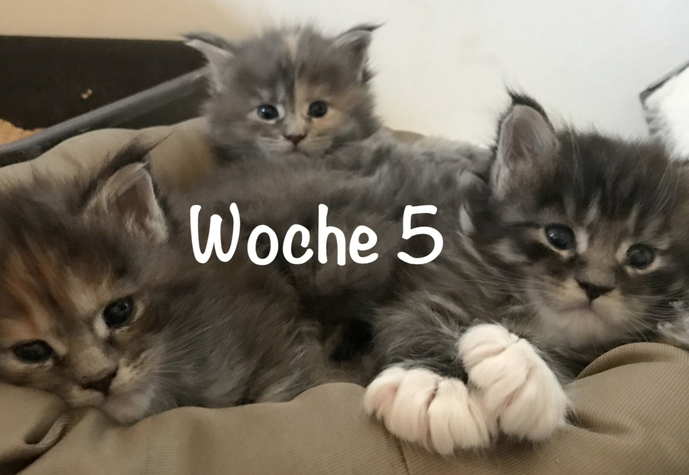 CC-Woche5.png