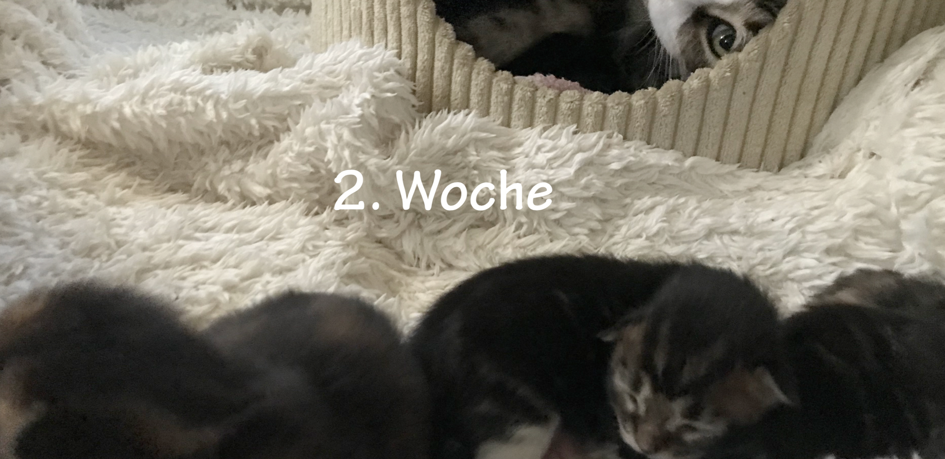01-Woche2.png