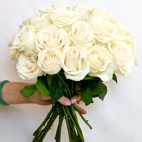 White Avalanche Roses