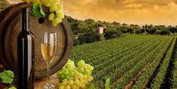 Hunter Valley Winery Tours