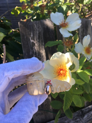 9k Rose Gold Tooth