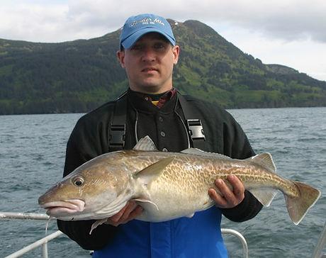 Pacific grey cod