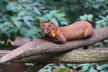 wild-animal-4015349.jpg
