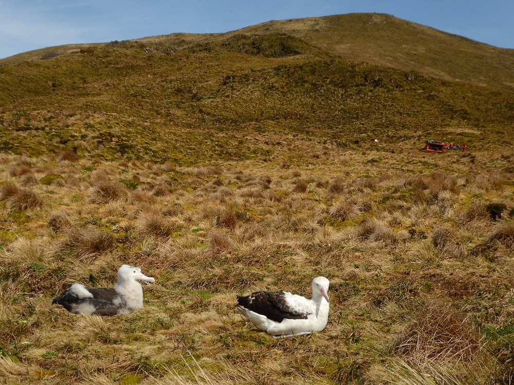 The team take a break in the background as this chick and it's parent enjoy the sunshine! (S.Oppel)