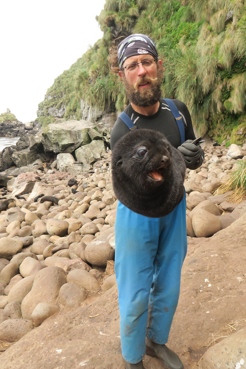 Senior Field Assistant Fabrice holding a seal pup, ready to be weighed (Jaimie Cleeland)