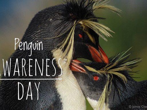 Happy Penguin Awareness Day!