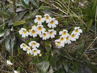 AN ALPINE FLOWER A DAY