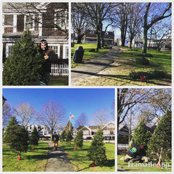 Christmas trees in the park 2018