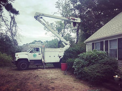 The tree crew in action today in Chatham