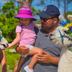 Llama Family.png