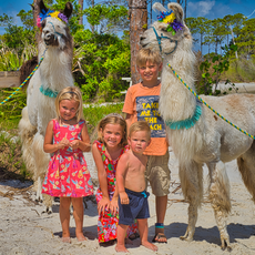 Family Llama.png