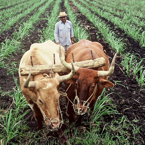 COW PLOW