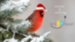 Cardinal Christmas.jpg