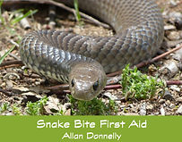 Snake Bike First Aid.jpg