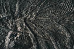 Les couleurs des fossiles