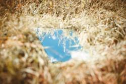 Spiegel im Gras